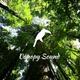 Canopy Sound 005