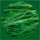 O. ISAYEVA – Green Sunday (January 2017)