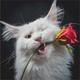 Kitten Candy - Spring 2019 Promo