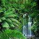 Rainforest Natural Sounds logo