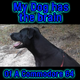 My Dog Has The Brain Of A Commodore 64