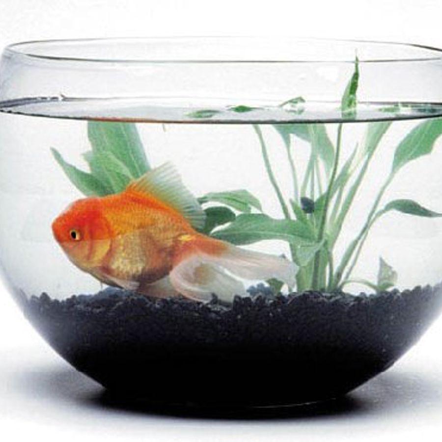 Картинки аквариум с рыбками анимация, фото для начальника