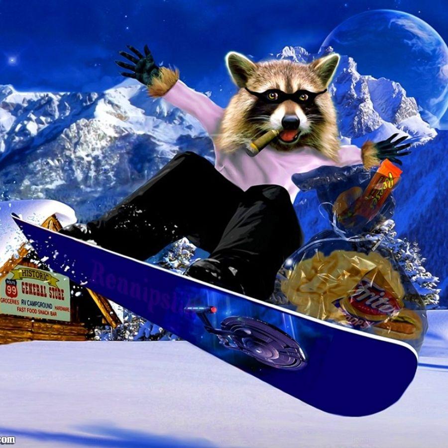 коты сноубордисты фото тиски