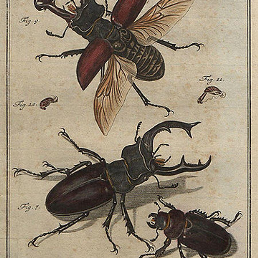открытка с жуками книга