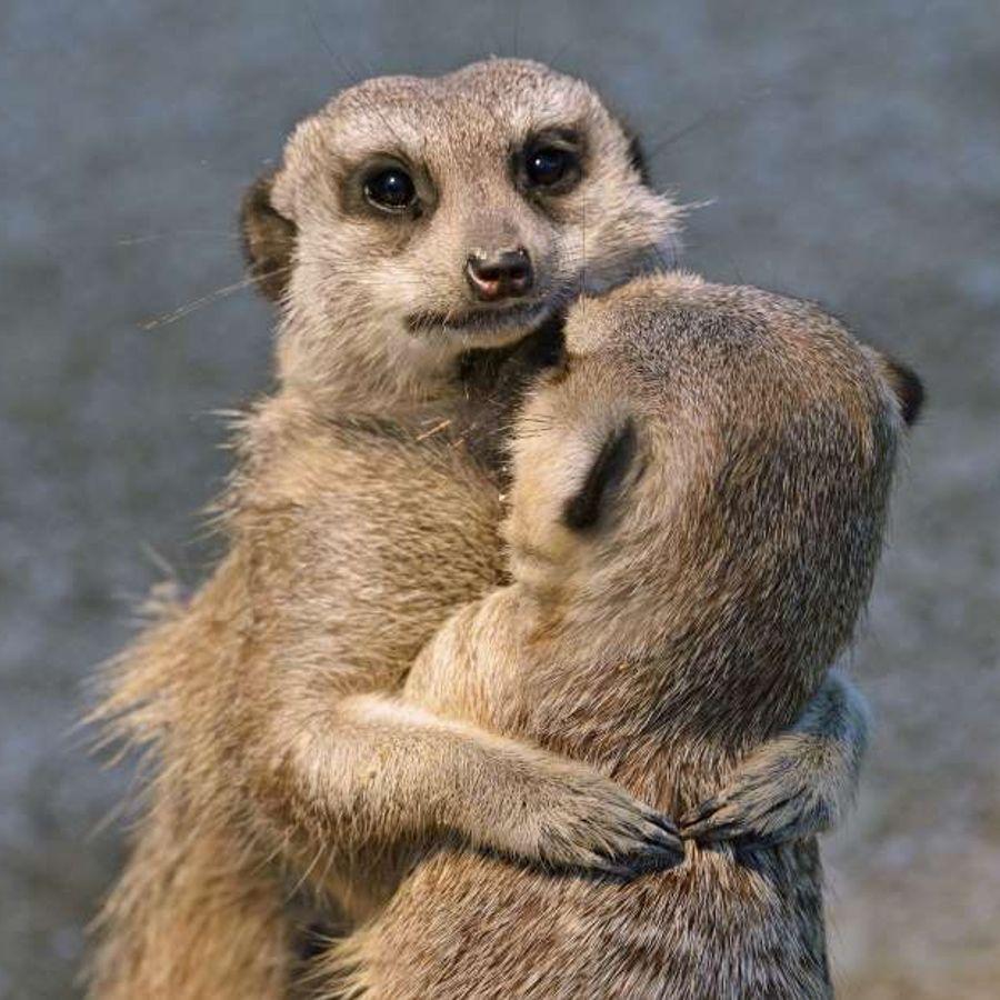 Картинки животные любовь смешные, прикольные все