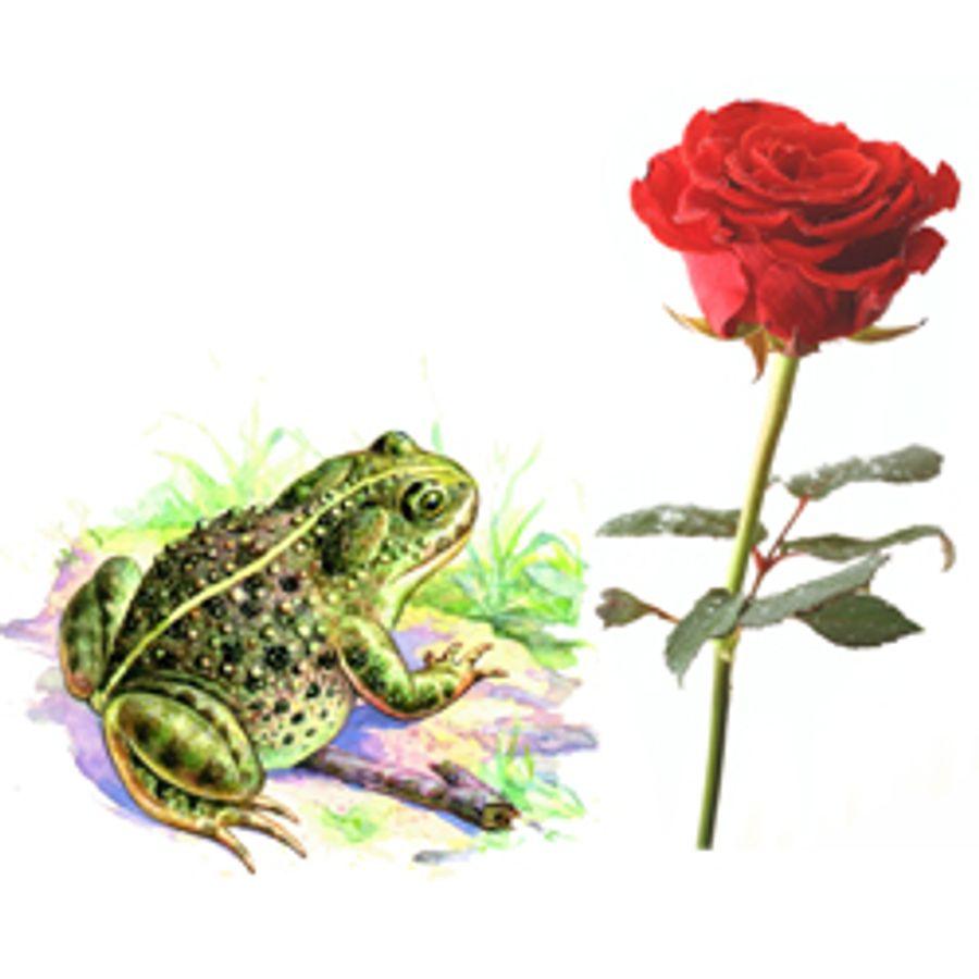 Гаршин картинки о жабе и розе